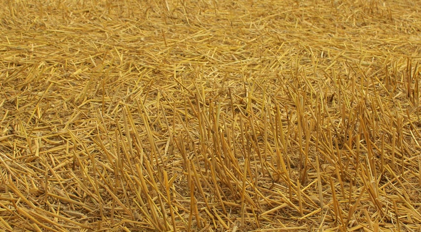 Data-Centric Security: How Six Enterprises Successfully Turned Gold Into Straw